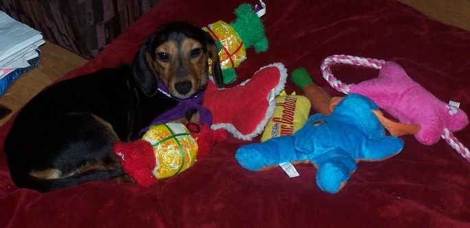 Trixie_and_toys_1_