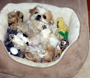 Mitzy_in_her_bed_with_toys_1_