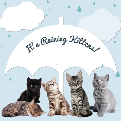 Its-Raining-Kittens